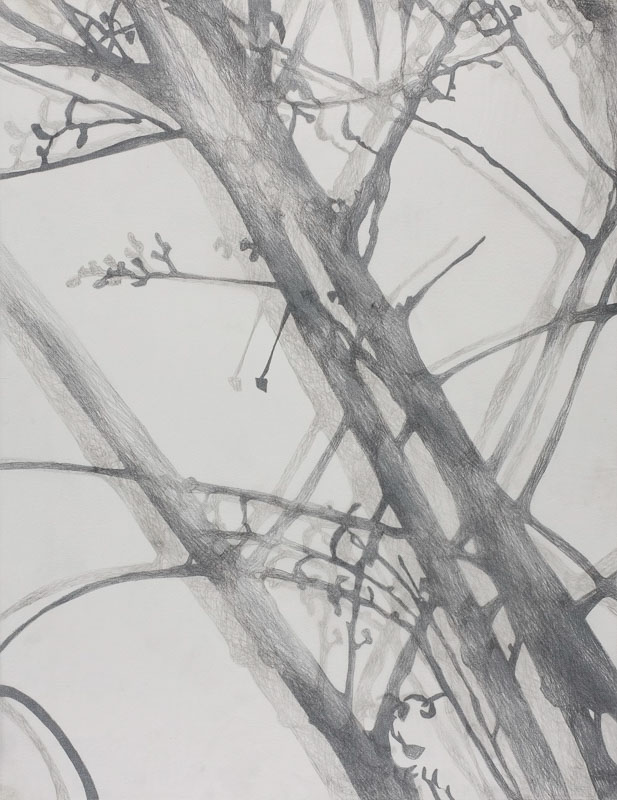 Branches, 1998, pencil drawing on paper & kite paper, 60x85 cm.