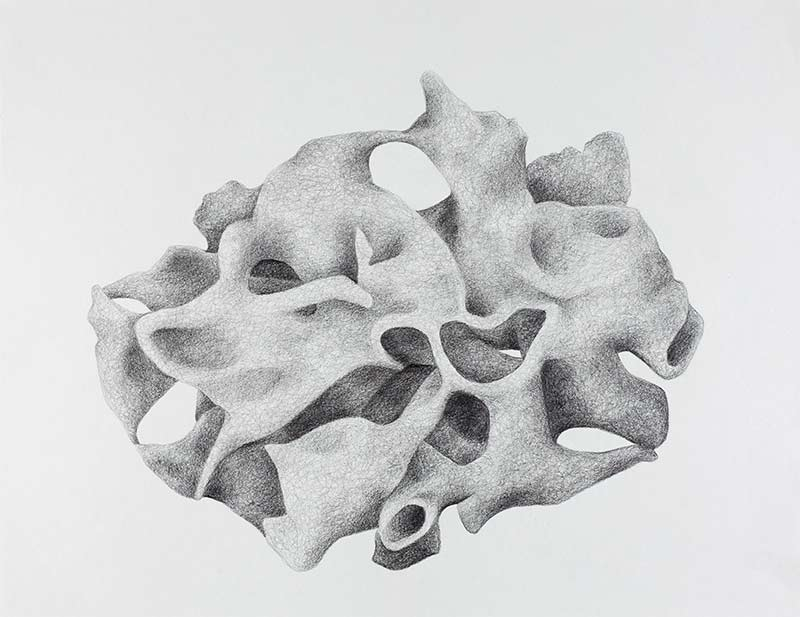 coral form, 2000, pencil drawing, 75x100 cm.