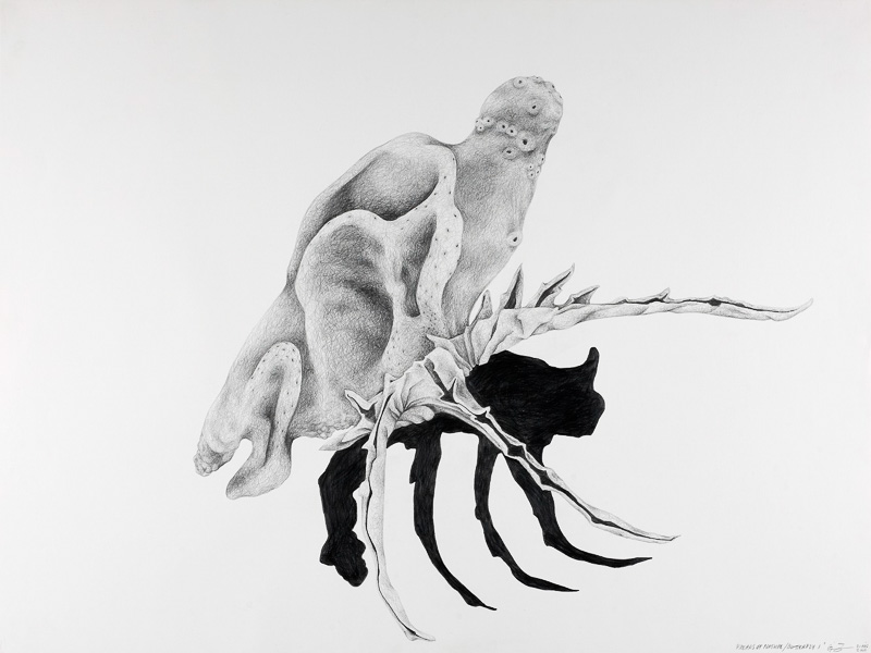 butterfly 1, 2000, pencil drawing, 75x100 cm.