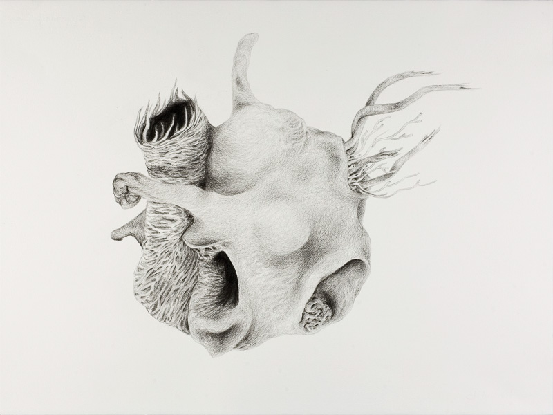 no title, 2000, pencil drawing, 75x100 cm.