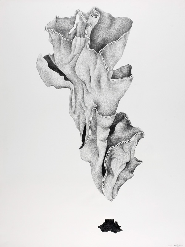 shell form, 2000, pencil drawing, 75x100 cm.