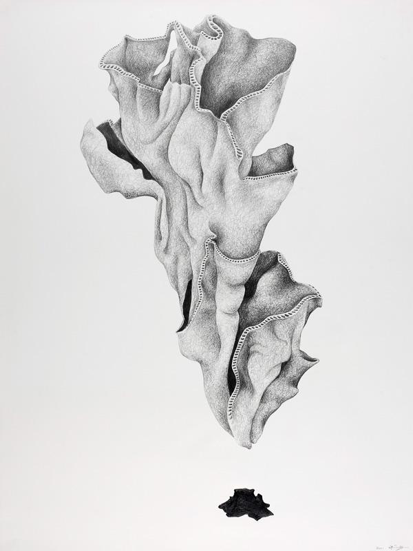 shell form, 2000, pencil drawing, 75x100 cm.